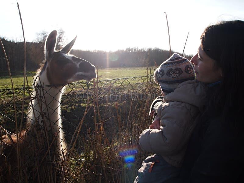 Женщина, ребенок и лам на солнечный день в сельской местности стоковые изображения