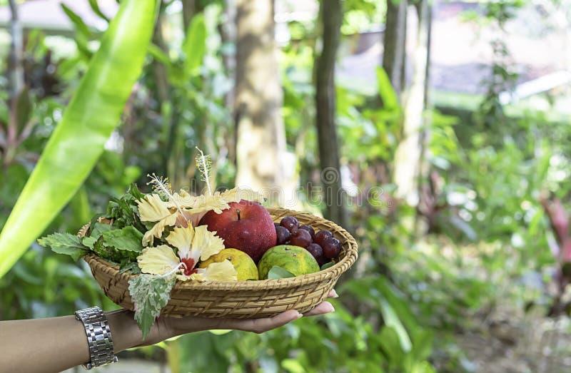 Женщина руки держа соткет бамбуковые корзины с деревьями предпосылки Яблока, апельсина и виноградины расплывчатыми стоковые изображения