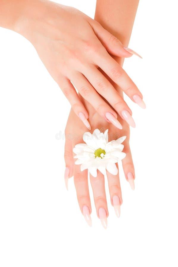 женщина рук цветков стоковые фотографии rf