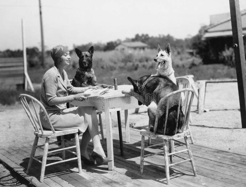 Женщина сидя на таблице снаружи с 3 собаками (все показанные люди более длинные живущие и никакое имущество не существует Предпис стоковые фотографии rf