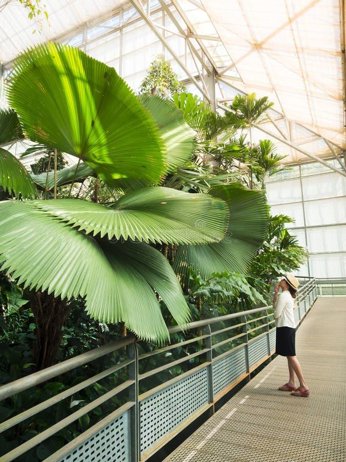 Женщина смотря большую пальму стоковая фотография