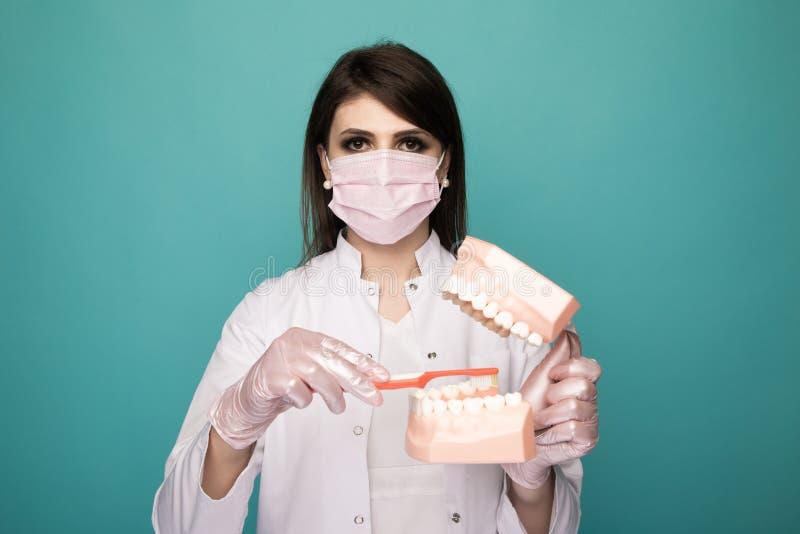 Женщина-стоматолог в белой маске модель челюсть и кисть, демонстрирующая процесс очистки изолированных помещений стоковые изображения rf