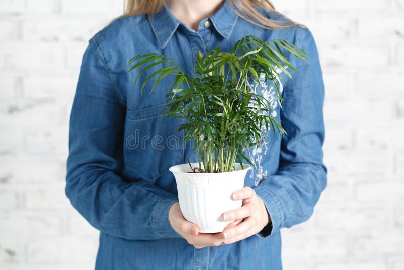Женщина с зеленым домашним заводом в руках стоковые фото