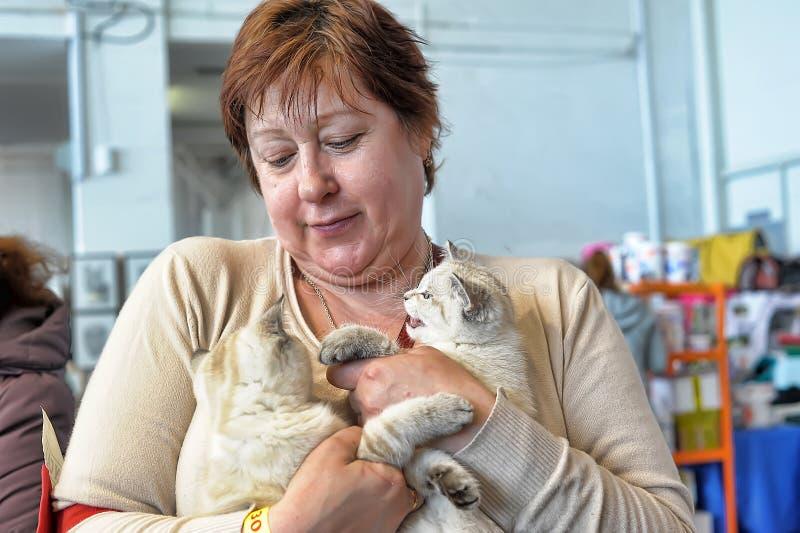 Женщина с котятами стоковое изображение rf