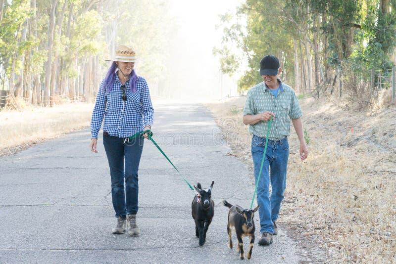 Женщина с фиолетовыми козами волос и человека идя на проселочной дороге стоковое изображение rf