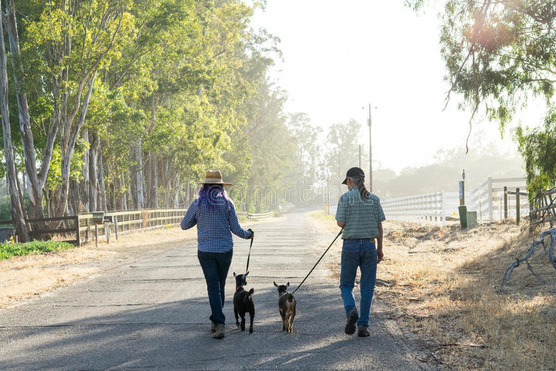 Женщина с фиолетовыми козами волос и человека идя на проселочной дороге стоковые изображения rf