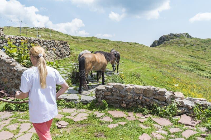 Женщина управляет ее лошадями горы на хате Eho Лошади служат транспортировать поставки от и к хаты стоковое изображение