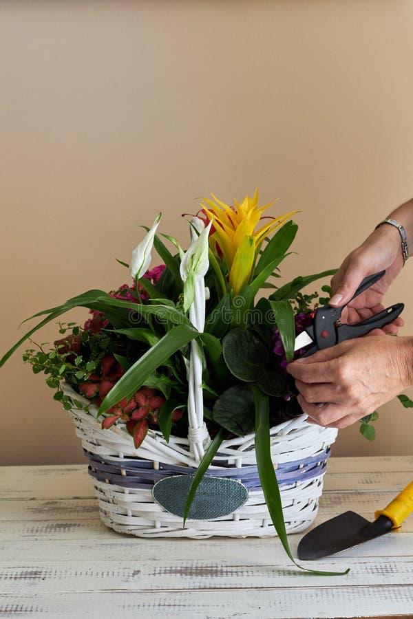 Женщина устанавливая различные цветки в плетеной корзине стоковое изображение