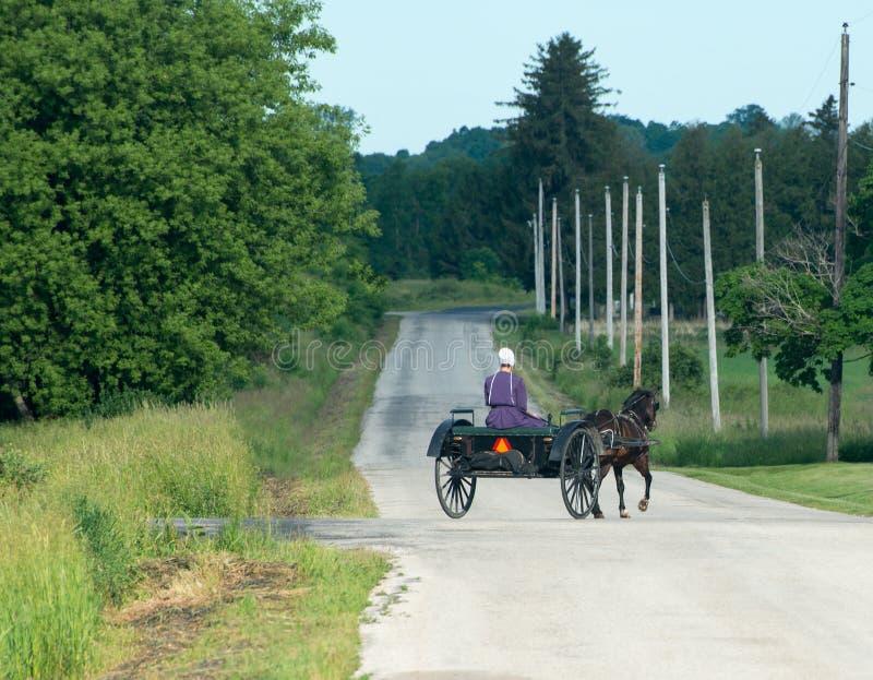 Женщина фермы Амишей, лошадь, багги стоковое фото rf