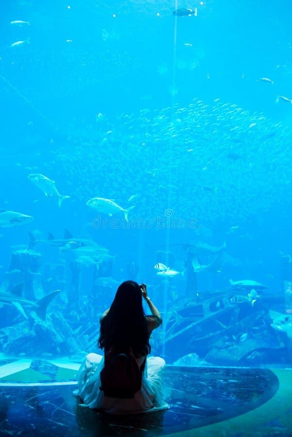 Женщина фотографируя в большом аквариуме стоковые фото