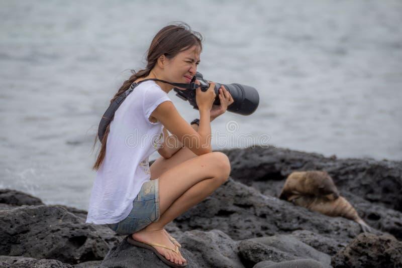 Женщина фотографируя жаркую погоду чувства морсого льва стоковые изображения