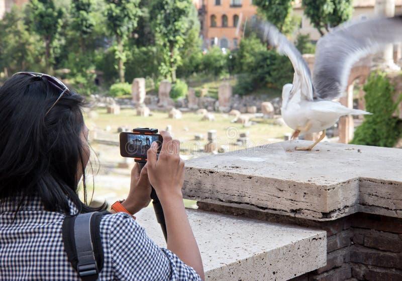 Женщина фотографируя чайку моря стоковое фото