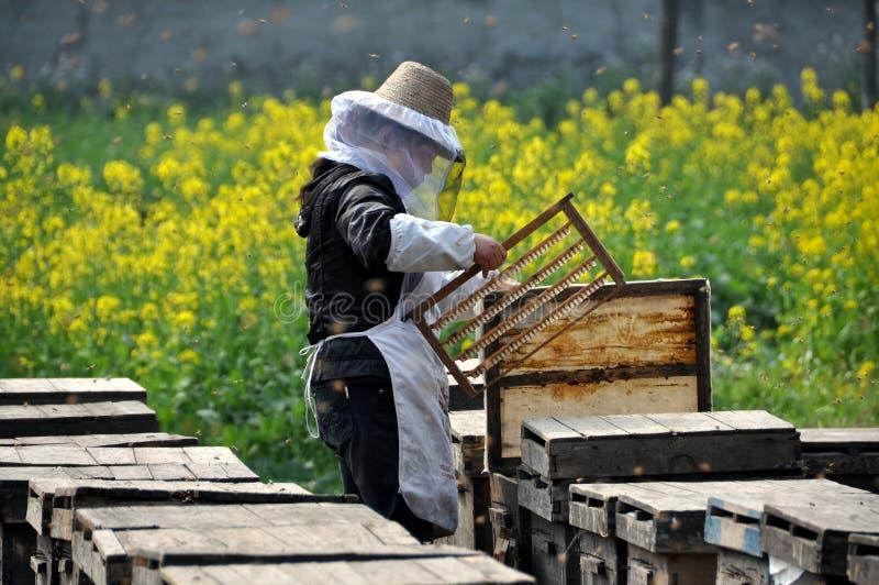 женщина pengzhou фарфора beekeeper стоковые изображения