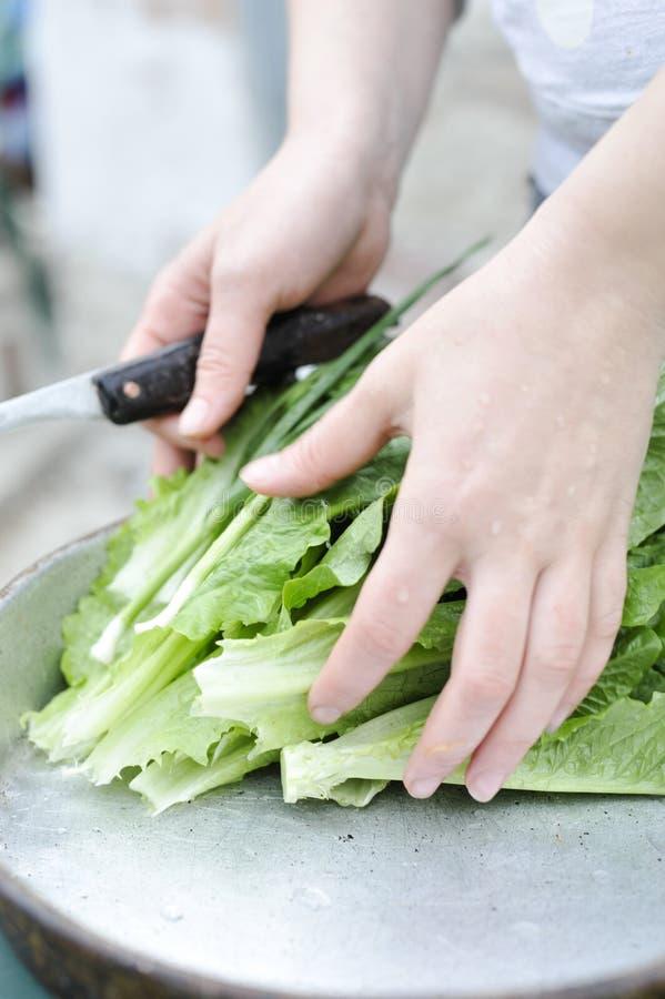 Женщина praparing зеленый салат стоковая фотография rf
