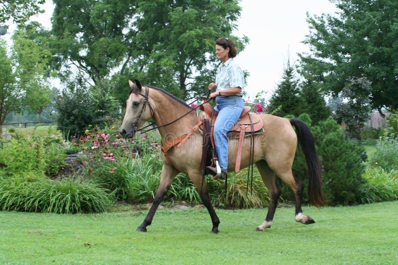 Download женщина riding лошади стоковое изображение. изображение насчитывающей halter - 6862479