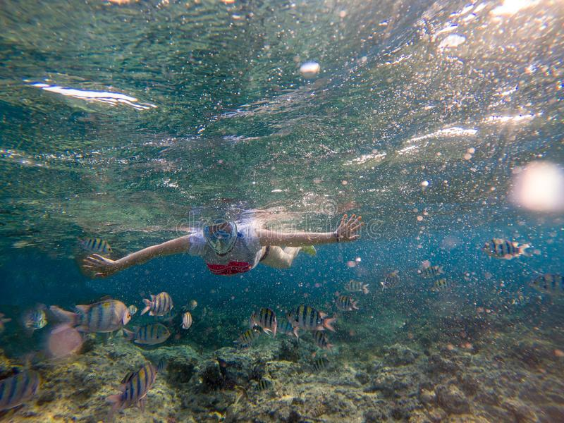 Женщина snorkeling в Красном Море стоковые фото
