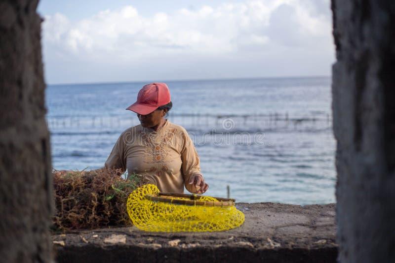 Женщины видов морские водоросли вне от ее обрабатывая землю сети стоковые изображения rf