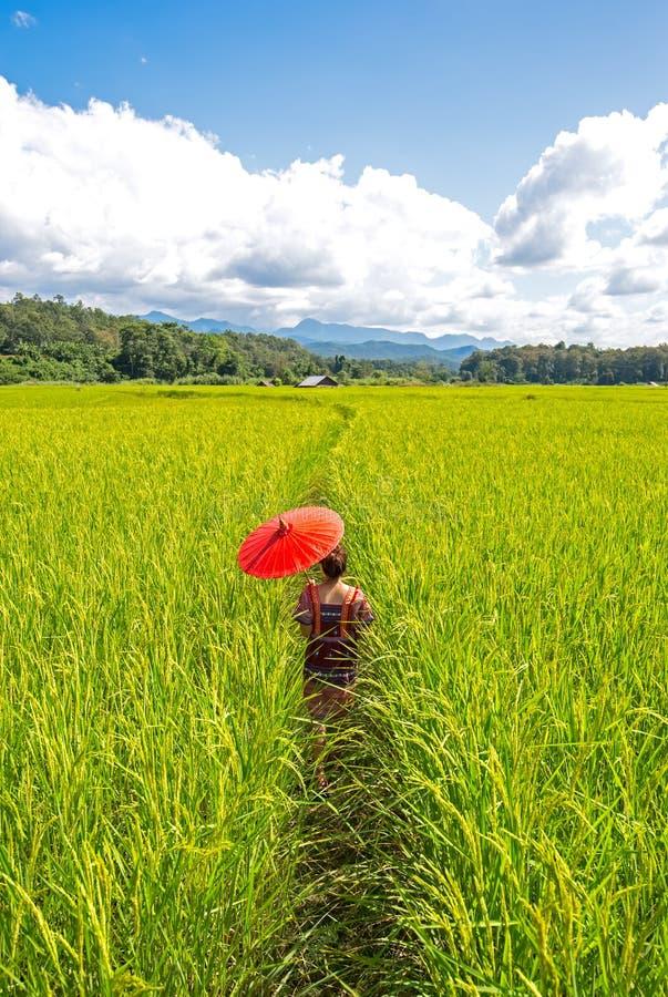 Женщины держа желтый зонтик идут в зеленое поле риса Предпосылка под голубым небом стоковые изображения rf