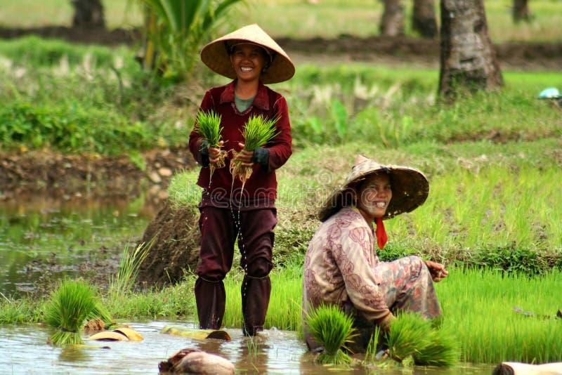 женщины поля стоковая фотография rf