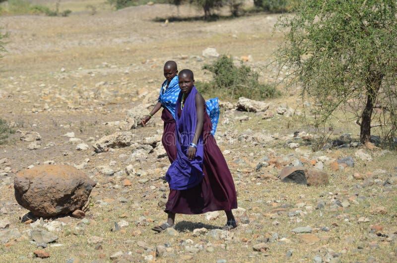 Женщины принадлежа к племенам Maasai идя в куст стоковое изображение