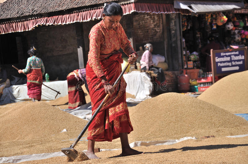 Женщины суша рис стоковая фотография