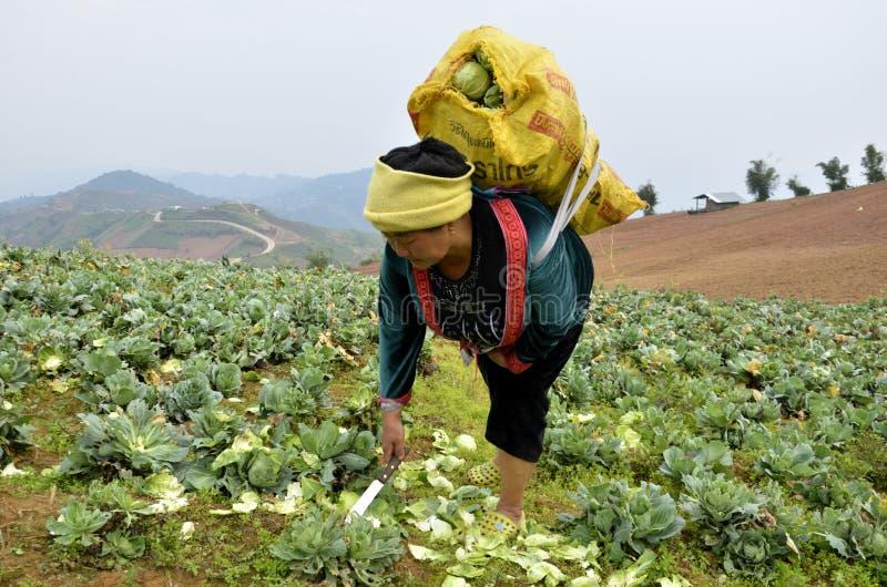 женщины doi chao земледелия стоковые фото