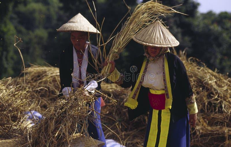 женщины hmong стоковое фото rf
