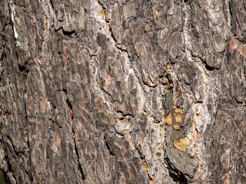 Жесткие полоски пролегают по диагонали вдоль неровной поверхности сосны стоковые изображения