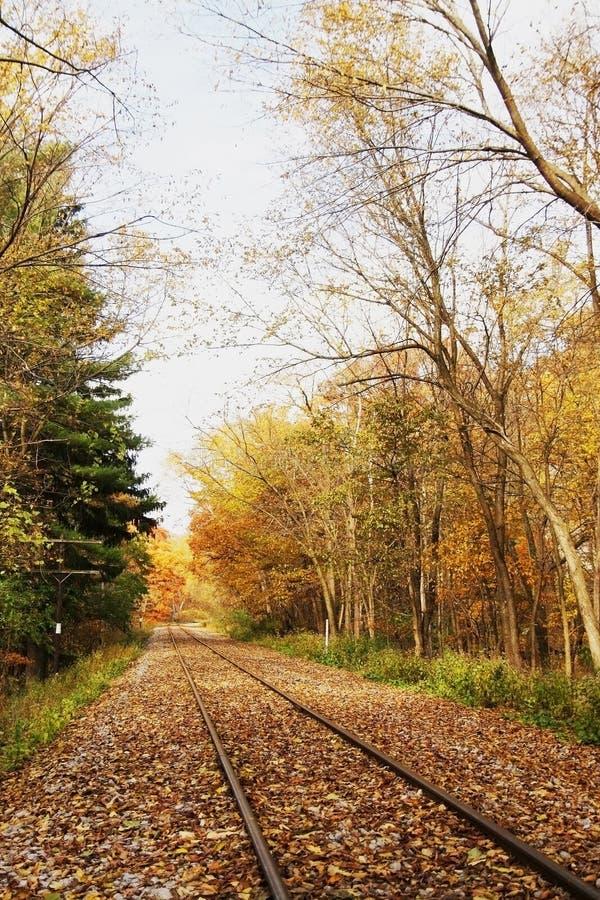 Железнодорожный путь в лесе осени стоковое изображение