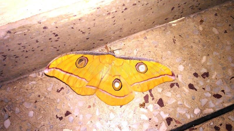 желтая бабочка стоковое изображение rf