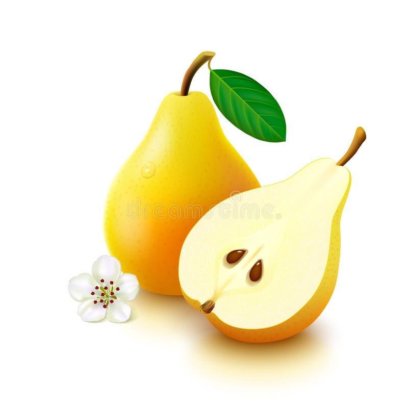 Желтая груша на белой предпосылке иллюстрация штока
