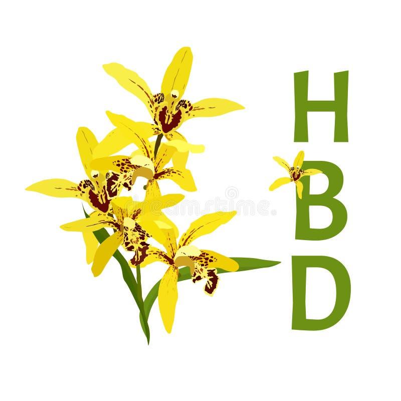 Желтая орхидея на белой предпосылке, поздравительой открытке ко дню рождения с днем рождений бесплатная иллюстрация