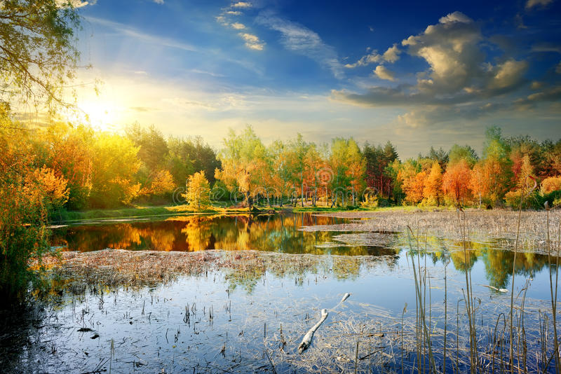 Желтая осень на реке стоковая фотография