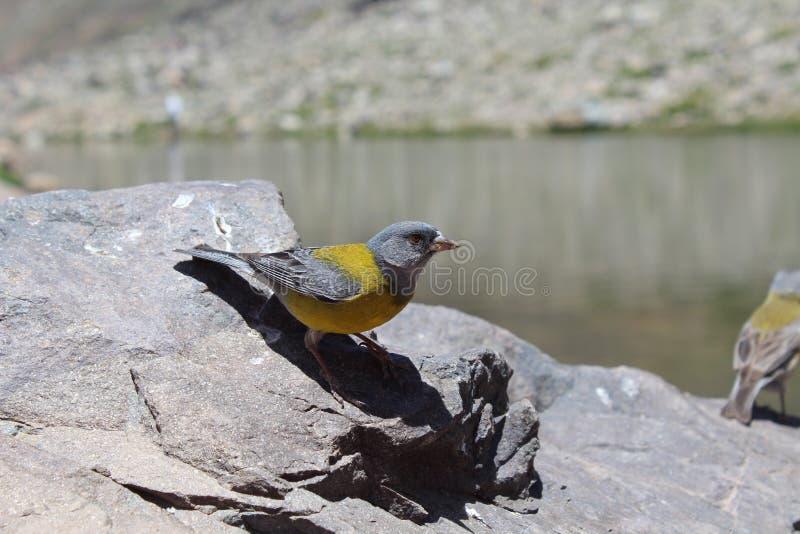 Желтая птица около, который нужно лететь стоковая фотография