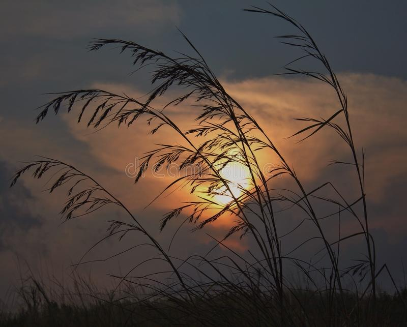 Желтая солнечность стоковое фото