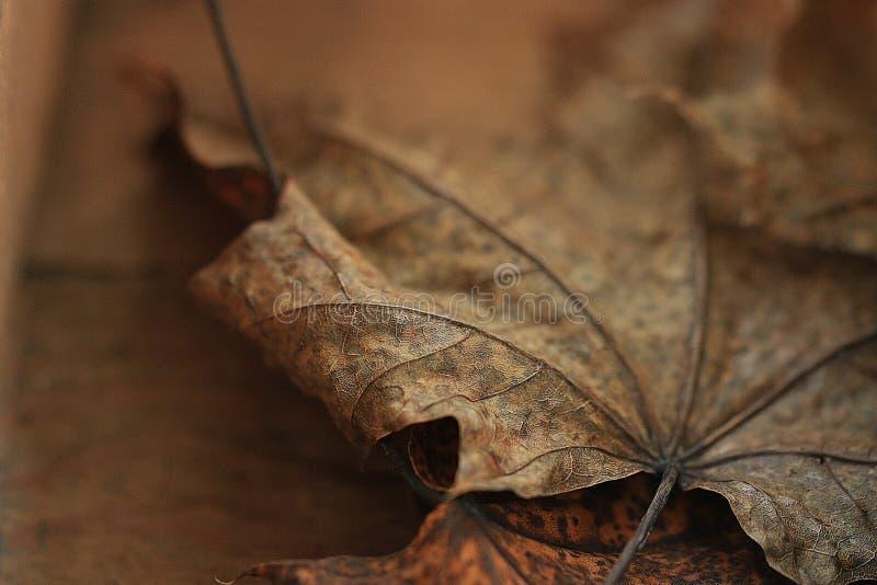 Желтая сухая предпосылка листьев осени стоковая фотография
