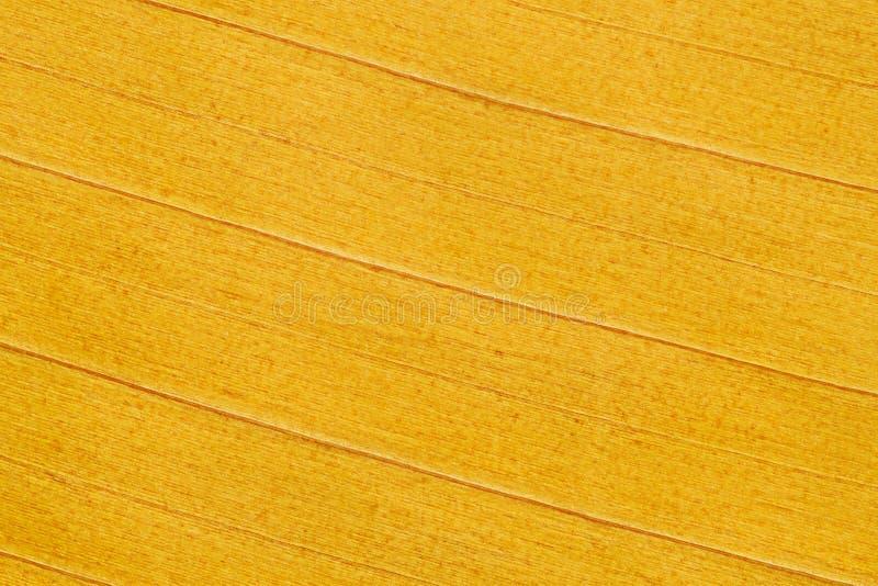 Желтая текстура лист банана для картины и предпосылки стоковые фото