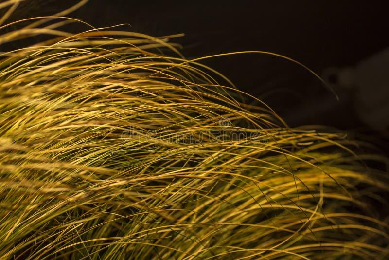Желтая трава стоковые фотографии rf