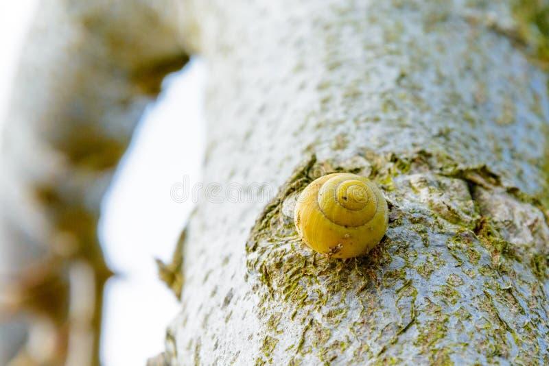Желтая улитка на дереве стоковое фото rf