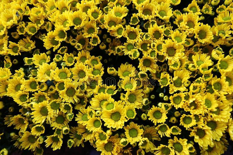 Download Желтая хризантема стоковое изображение. изображение насчитывающей естественно - 81807223