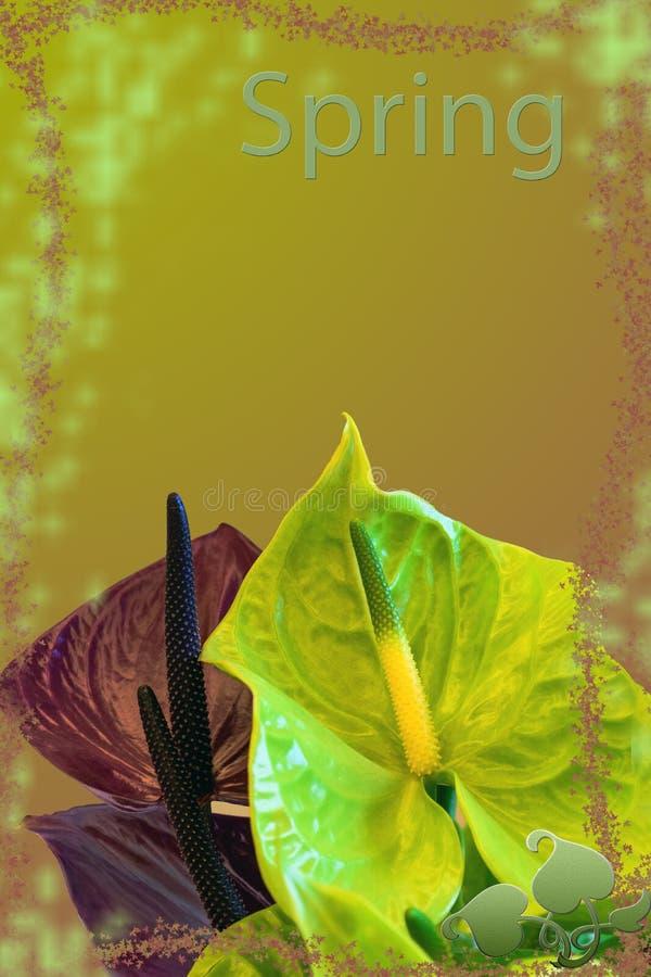 Желтое ` весны ` предпосылки с 2 цветами callas стоковые изображения