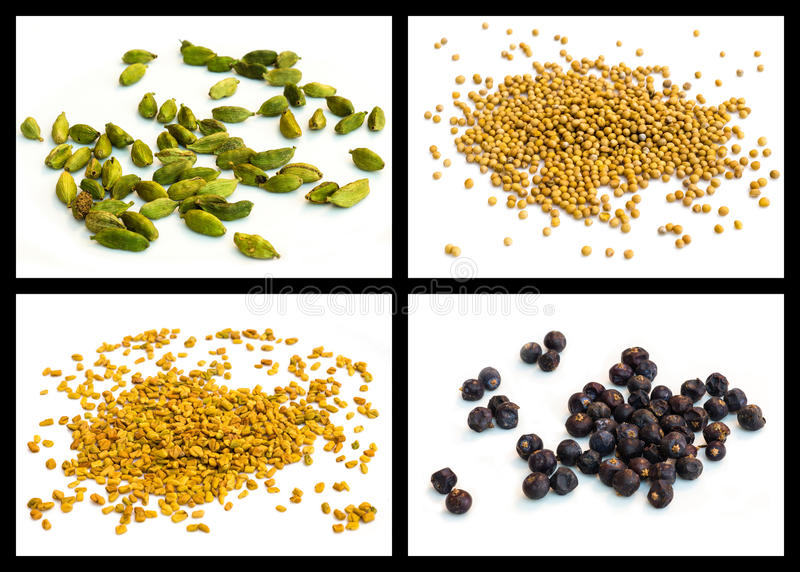 Желтое горчичное зерно, семя грека сена, кардамона, можжевельника стоковые изображения
