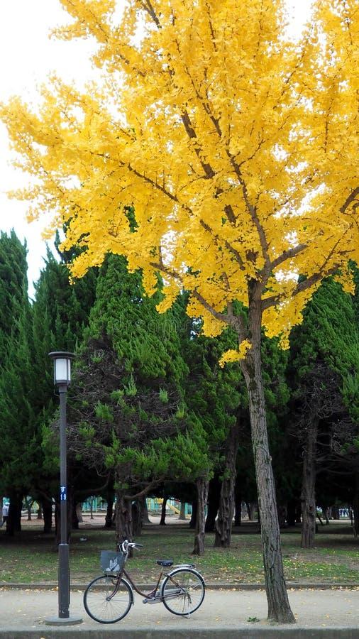 Желтое дерево лист в осени и меньшем старом велосипеде стоковые фотографии rf