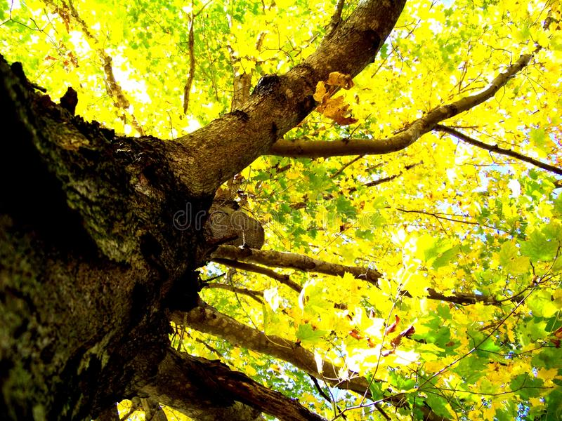 Желтое дерево стоковое фото rf