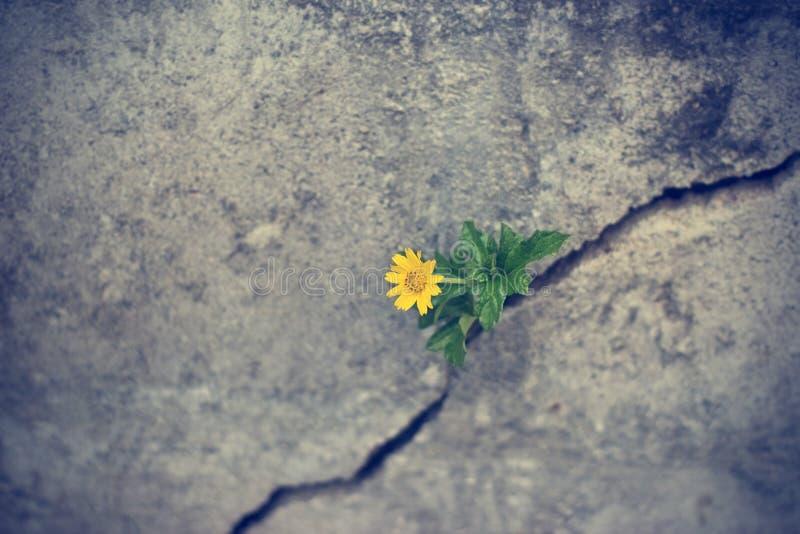 Желтое растущее цветка на великолепной стене grunge стоковое фото