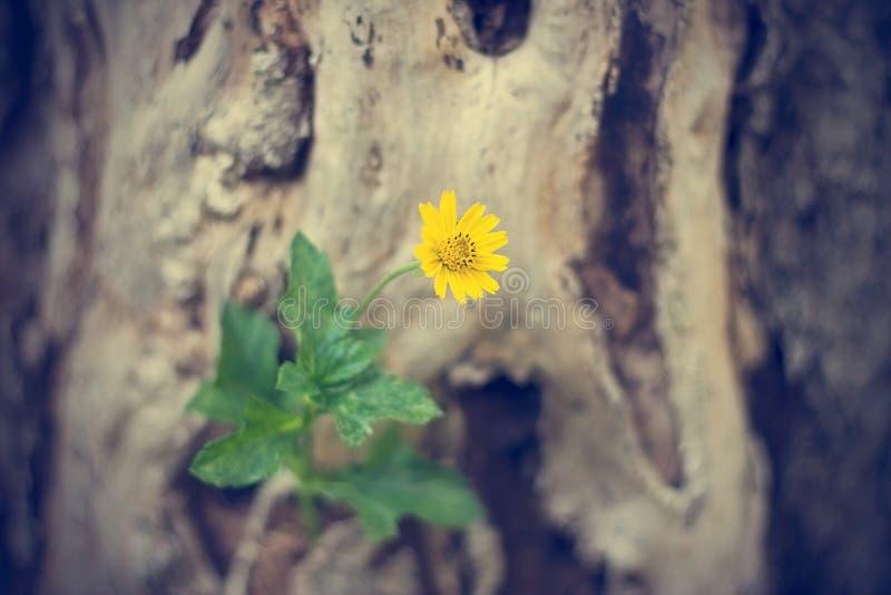 Желтое растущее цветка на мертвом дереве, мягком фокусе, винтажном цвете стоковые изображения