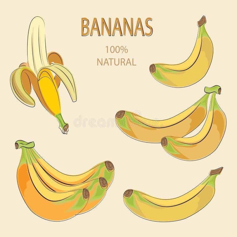Желтые бананы fruits тропическо бесплатная иллюстрация