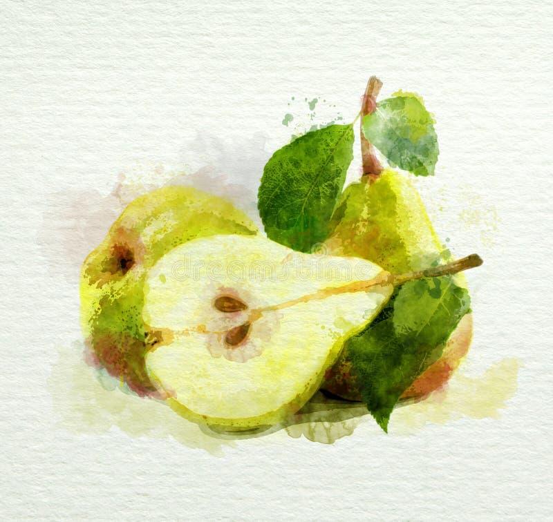 Желтые груши с листьями на белой предпосылке. Картина акварели иллюстрация вектора