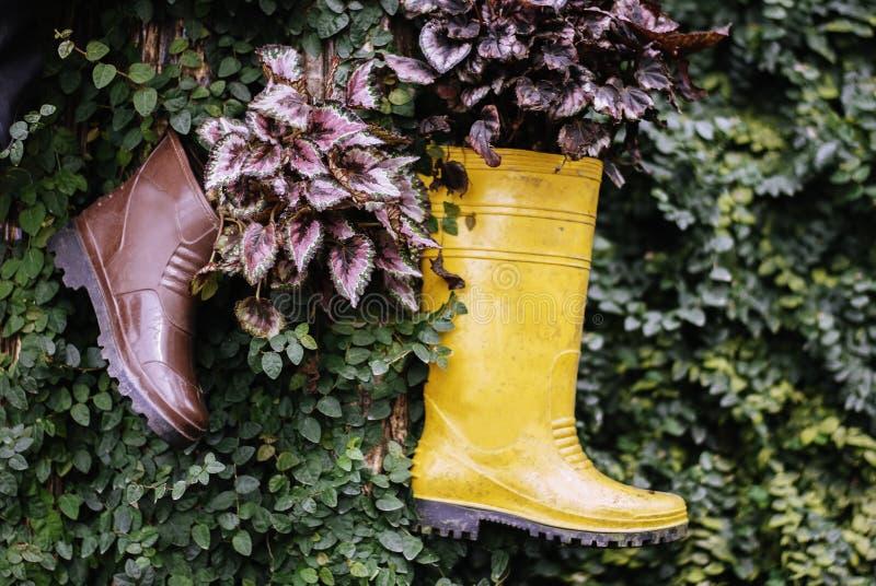 Желтые листья смертной казни через повешение и зеленого цвета резинового ботинка стоковые фотографии rf