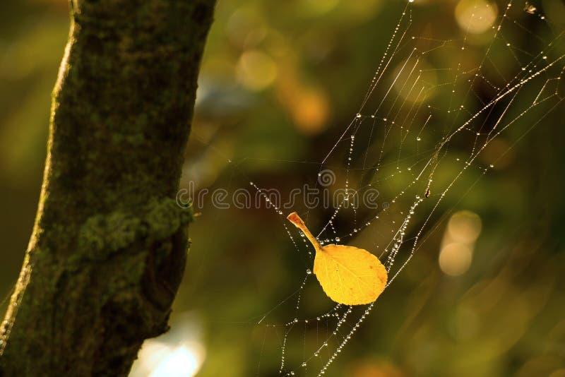 Желтые лист в сети стоковое фото rf